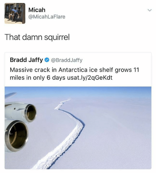Dank, Squirrel, and Antarctica: Micah  @MicahLa Flare  That damn squirrel  Bradd Jaffy  @Bradd Jaffy  Massive crack in Antarctica ice shelf grows 11  miles in only 6 days usat.ly/2qGeKdt