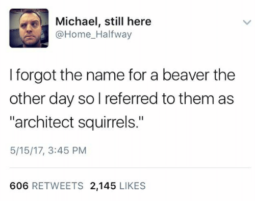 """Home, Michael, and Beaver: Michael, still here  @Home_Halfway  I forgot the name for a beaver the  other day so l referred to them as  """"architect squirrels.""""  5/15/17, 3:45 PM  606 RETWEETS 2,145 LIKES"""