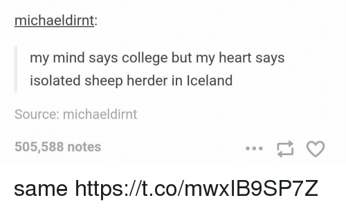 College, Memes, and Heart: michaeldirnt  my mind says college but my heart says  isolated sheep herder in lceland  Source: michaeldirnt  505,588 notes same https://t.co/mwxIB9SP7Z