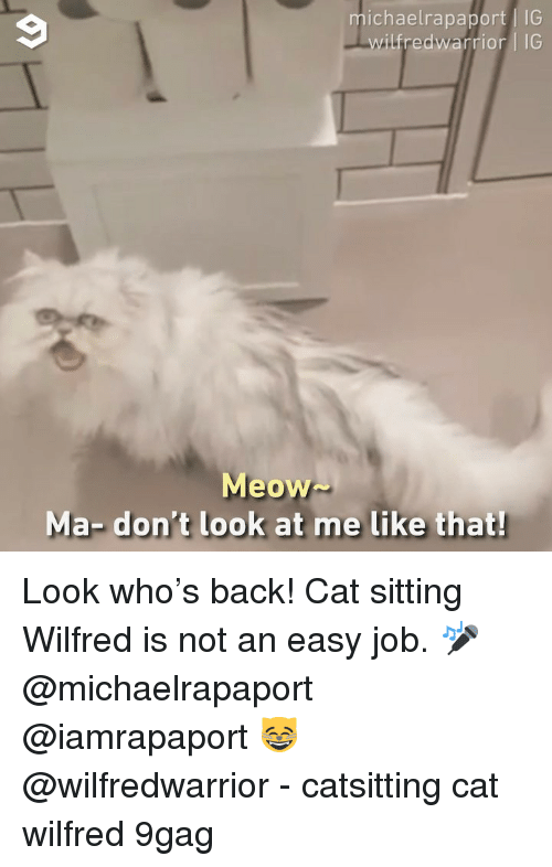 9gag, Memes, and Back: michaelrapaport IG  ilfredwarrior IG  Meow  Ma- don't look at me like that Look who's back! Cat sitting Wilfred is not an easy job. 🎤 @michaelrapaport @iamrapaport 😸 @wilfredwarrior - catsitting cat wilfred 9gag