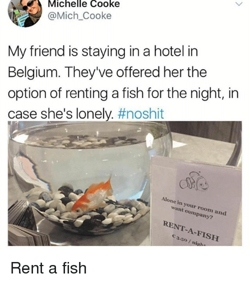 Being Alone, Belgium, and Memes: Michelle Cooke  @Mich Cooke  My friend is staying in a hotel in  Belgium. They've offered her the  option of renting a fish for the night, in  case she's lonely. #noshit  Alone in your room and  want company?  RENT-A-FISH  3.5o/ nigl Rent a fish