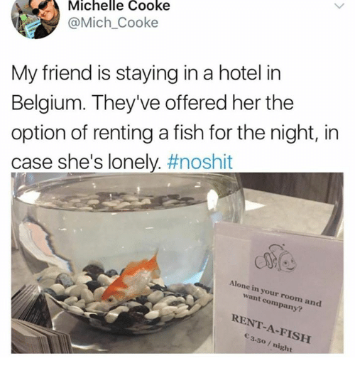Being Alone, Belgium, and Fish: Michelle Cooke  @Mich_Cooke  My friend is staying in a hotel in  Belgium. They've offered her the  option of renting a fish for the night, in  case she's lonely. #noshit  Alone in your room and  want company?  RENT-A-FISH  3.50 /night