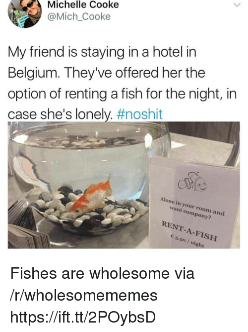 Being Alone, Belgium, and Fish: Michelle Cooke  @Mich_Cooke  My friend is staying in a hotel in  Belgium. They've offered her the  option of renting a fish for the night, in  case she's lonely. #noshit  Alone in your room and  want company?  RENT-A-FISH  3.50/ night Fishes are wholesome via /r/wholesomememes https://ift.tt/2POybsD