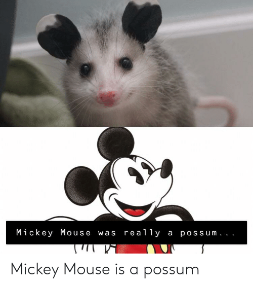 Mickey Mouse Was Re Ally a Possum Mickey Mouse Is a Possum