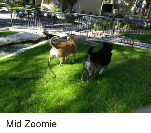 Zoomie and Mid