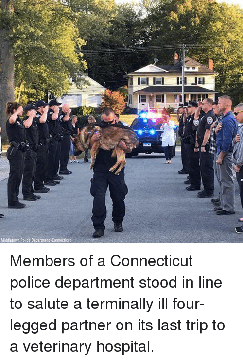 Memes, Police, and Connecticut: Middletown Police Department-Confecticut Members of a Connecticut police department stood in line to salute a terminally ill four-legged partner on its last trip to a veterinary hospital.