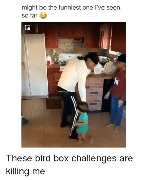 Memes, 🤖, and Box: might be the funniest one l've seen,  so far These bird box challenges are killing me