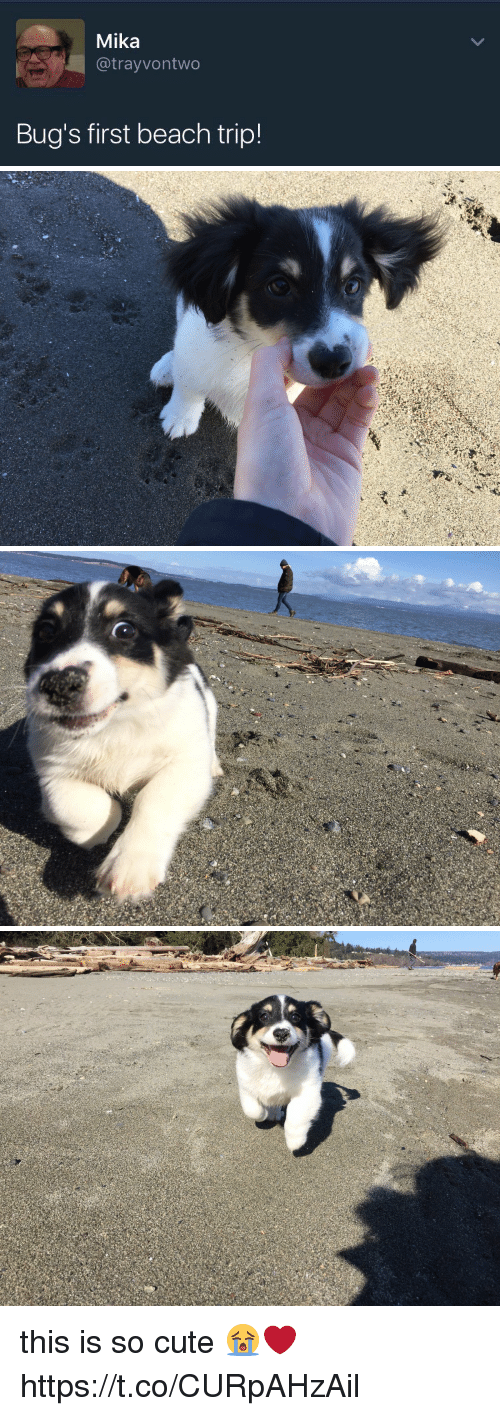 Cute, Beach, and Girl Memes: Mika  @trayvontwo  Bug's first beach trip! this is so cute 😭❤️ https://t.co/CURpAHzAil