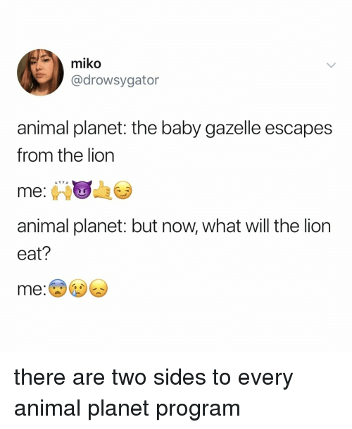 Animal Planet, Animal, and Gazelle: miko  @drowsygator  animal planet: the baby gazelle escapes  from the lion  me  animal planet: but now, what will the lion  eat? there are two sides to every animal planet program