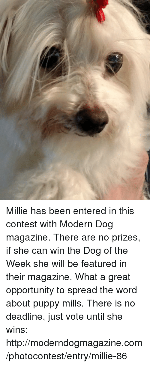 Millie Has Been Entered In This Contest With Modern Dog Magazine