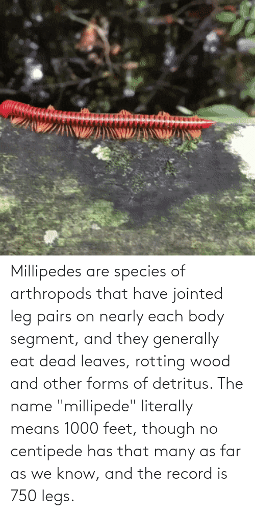 """Record, Feet, and Species: Millipedes are species of arthropods that have jointed leg pairs on nearly each body segment, and they generally eat dead leaves, rotting wood and other forms of detritus. The name """"millipede"""" literally means 1000 feet, though no centipede has that many as far as we know, and the record is 750 legs."""