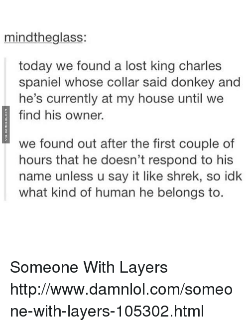 Donkey, Memes, and My House: mindthe glass:  today we found a lost king charles  spaniel whose collar said donkey and  he's currently at my house until we  find his owner.  we found out after the first couple of  hours that he doesn't respond to his  name unless u say it like shrek, so idk  what kind of human he belongs to. Someone With Layers http://www.damnlol.com/someone-with-layers-105302.html
