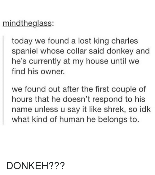 Donkey, Memes, and My House: mindtheglass:  today we found a lost king charles  spaniel whose collar said donkey and  he's currently at my house until we  find his owner.  we found out after the first couple of  hours that he doesn't respond to his  name unless u say it like shrek, so idk  what kind of human he belongs to DONKEH???
