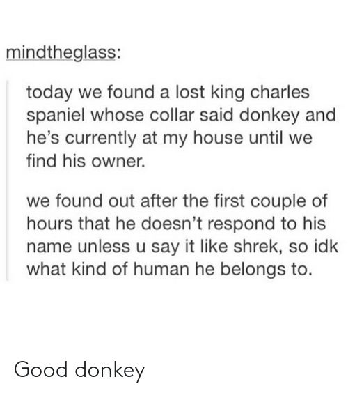Donkey, My House, and Shrek: mindtheglass:  today we found a lost king charles  spaniel whose collar said donkey and  he's currently at my house until we  find his owner.  we found out after the first couple of  hours that he doesn't respond to his  name unless u say it like shrek, so idk  what kind of human he belongs to. Good donkey
