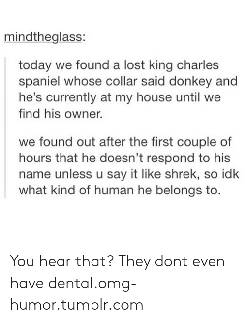 Donkey, My House, and Omg: mindtheglass:  today we found a lost king charles  spaniel whose collar said donkey and  he's currently at my house until we  find his owner.  we found out after the first couple of  hours that he doesn't respond to his  name unless u say it like shrek, so idk  what kind of human he belongs to. You hear that? They dont even have dental.omg-humor.tumblr.com