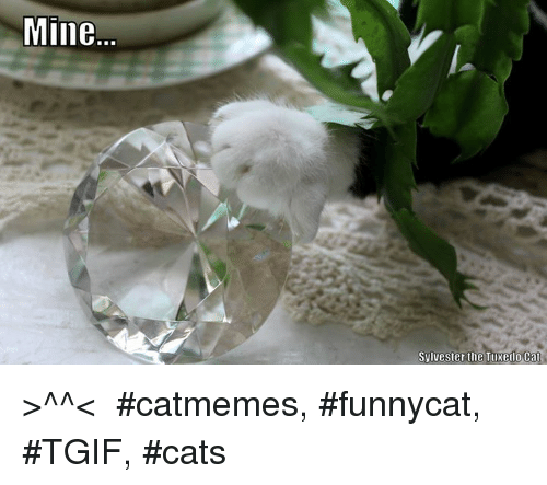 Mine Sylvester The Tuxedo Cat Catmemes Funnycat Tgif Cats