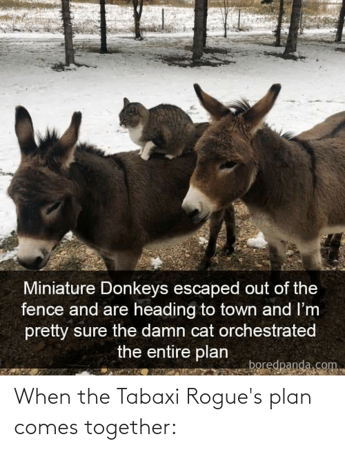 DnD, Cat, and Com: Miniature Donkeys escaped out of the  fence and are heading to town and I'm  pretty sure the damn cat orchestrated  the entire plan  boredpanda.com When the Tabaxi Rogue's plan comes together: