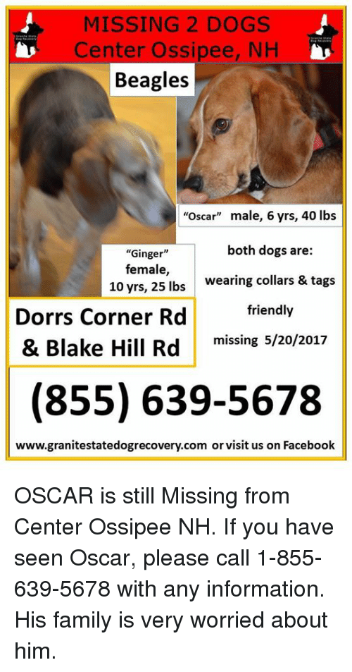 MISSING 2 DOGS Center Ossipee NH Beagles Oscar Male 6 Yrs 40