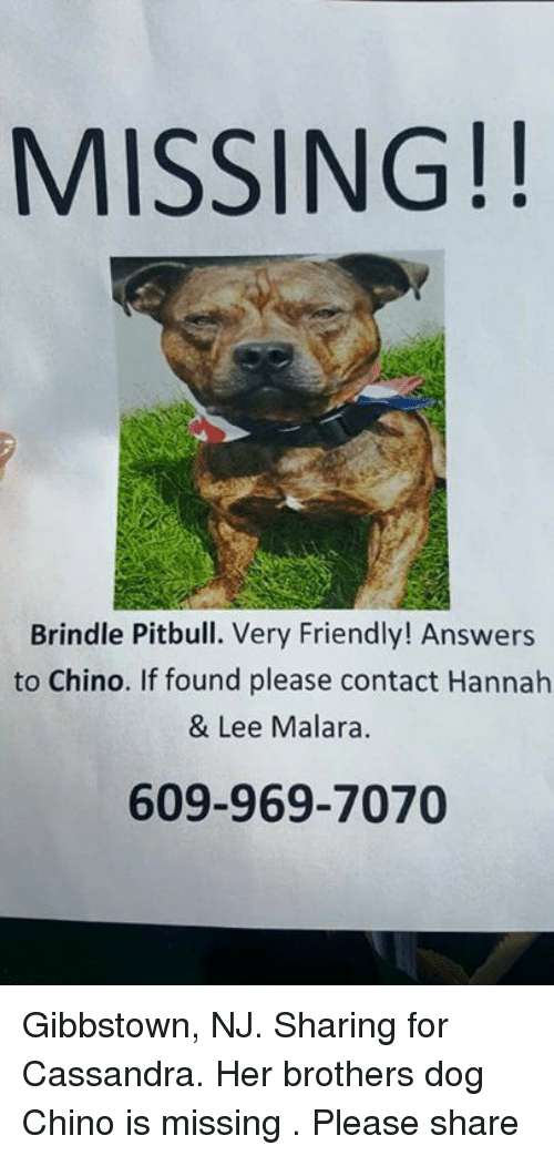 MISSING Brindle Pitbull Very Friendly! Answers to Chino if Found