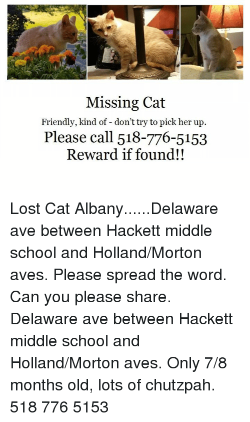Memes, School, and Lost: Missing Cat  Friendly, kind of - don't try to pick her up  Please call 518-776-5153  Reward if found!! Lost Cat Albany......Delaware ave between Hackett middle school and Holland/Morton aves.   Please spread the word.  Can you please share.  Delaware ave between Hackett middle school and Holland/Morton aves.  Only 7/8 months old, lots of chutzpah.  518 776 5153