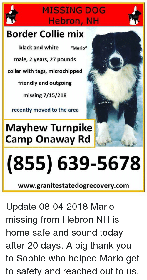 Missing Dog Hebron Nh Border Collie Mix Black And White Mario Male 2