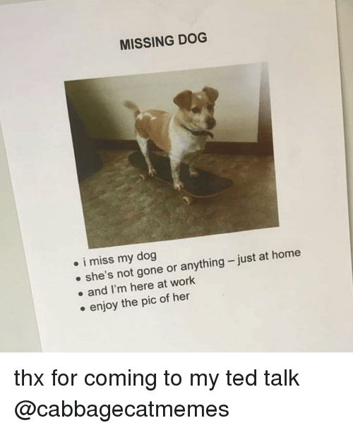 Memes, Ted, and Work: MISSING DOG  . i miss my dog  e she's not gone or anything-just at home  . and I'm here at work  . enjoy the pic of her thx for coming to my ted talk @cabbagecatmemes