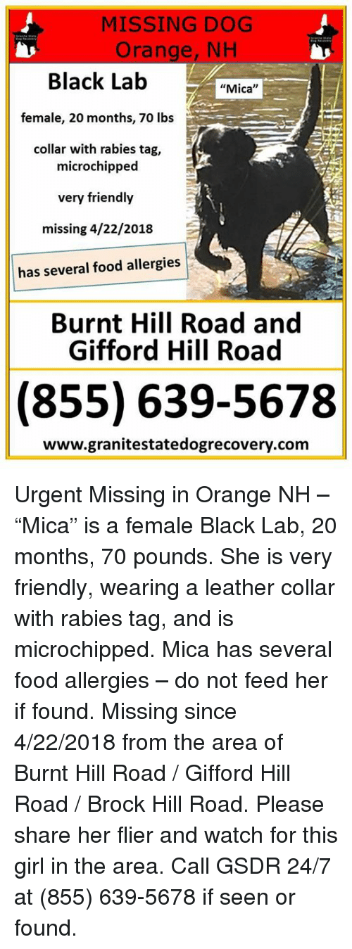 """Food, Memes, and Brock: MISSING DOG  Orange, NH  Black Lab  female, 20 months, 70 lbs  collar with rabies tag,  """"Mica""""  microchipped  very friendly  missing 4/22/2018  has several food allergies  Burnt Hill Road and  Gifford Hill Road  (855) 639-5678  www.granitestatedogrecovery.com Urgent Missing in Orange NH – """"Mica"""" is a female Black Lab, 20 months, 70 pounds.  She is very friendly, wearing a leather collar with rabies tag, and is microchipped.  Mica has several food allergies – do not feed her if found.  Missing since 4/22/2018 from the area of Burnt Hill Road / Gifford Hill Road / Brock Hill Road.  Please share her flier and watch for this girl in the area. Call GSDR 24/7 at (855) 639-5678 if seen or found."""
