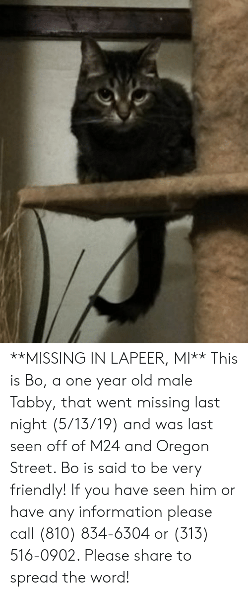 Memes, Information, and Oregon: **MISSING IN LAPEER, MI**  This is Bo, a one year old male Tabby, that went missing last night (5/13/19) and was last seen off of M24 and Oregon Street.  Bo is said to be very friendly!  If you have seen him or have any information please call (810) 834-6304 or (313) 516-0902.  Please share to spread the word!