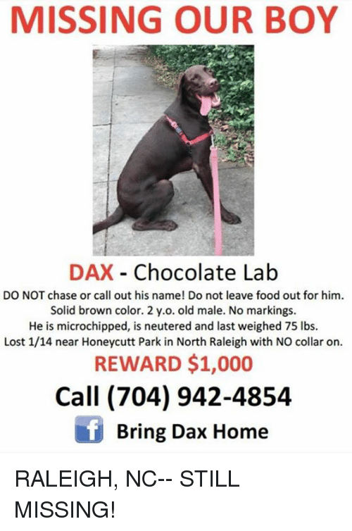 MISSING OUR BOY DAX - Chocolate Lab DO NOT Chase or Call Out