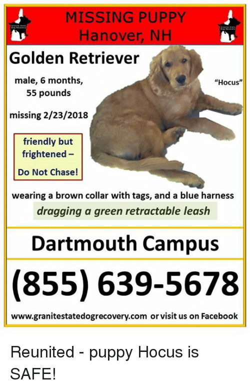 MISSING PUPPY Hanover NH Golden Retriever Male 6 Months 55