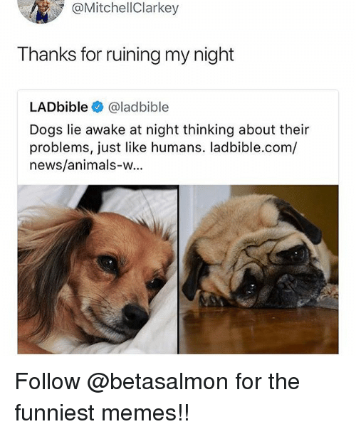 Animals, Dogs, and Memes: @MitchellClarkey  Thanks for ruining my night  LADbible@ladbible  Dogs lie awake at night thinking about their  problems, just like humans. ladbible.com/  news/animals-w... Follow @betasalmon for the funniest memes!!
