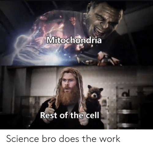 Work, Science, and Mitochondria: Mitochondria  Rest of the cell Science bro does the work