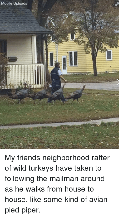 Taken, House, and Mobile: Mobile Uploads My friends neighborhood rafter of wild turkeys have taken to following the mailman around as he walks from house to house, like some kind of avian pied piper.
