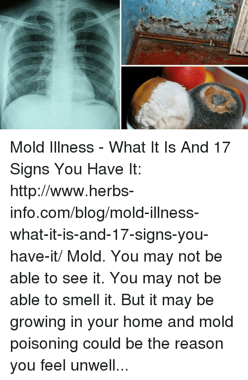 Memes Smell And Blog Mold Illness What It Is 17 Signs