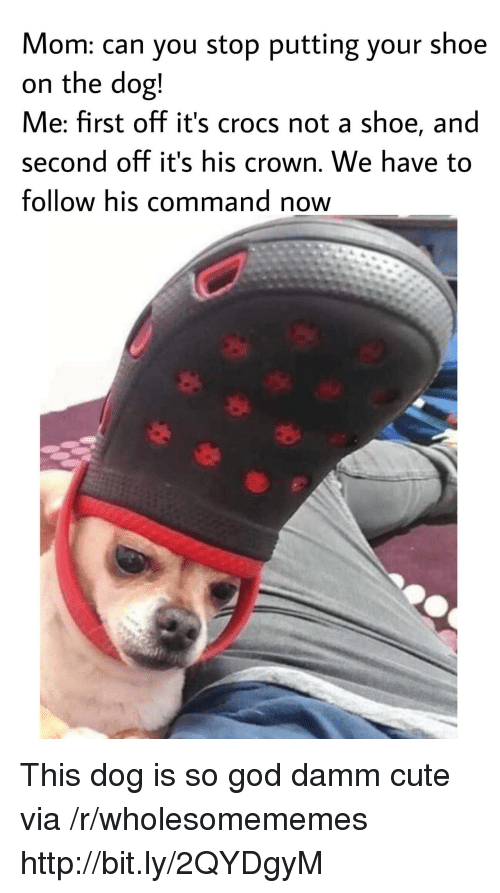 Crocs, Cute, and God: Mom: can you stop putting your shoe  on the dog!  Me: first off it's crocs not a shoe, and  second off it's his crown. We have to  follow his command now This dog is so god damm cute via /r/wholesomememes http://bit.ly/2QYDgyM