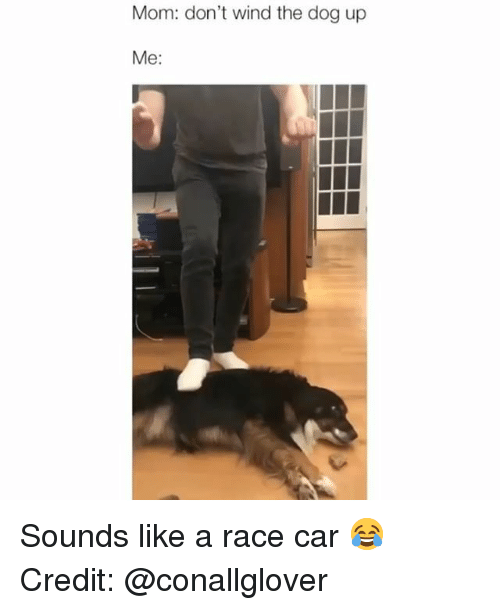 Mom Don't Wind the Dog Up Me Sounds Like a Race Car