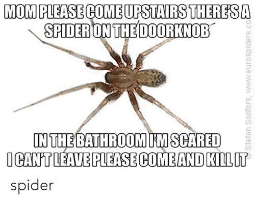 Spider, Mom, and Www: MOM PLEASE COME UPSTAIRS THERES A  SPIDER ON THE DOORKNOB  IN THE BATHROOM IM SCARED  ICANT LEAVE PLEASE COME AND KILLIT  Stefan Solfors, www.eurospiders.co spider