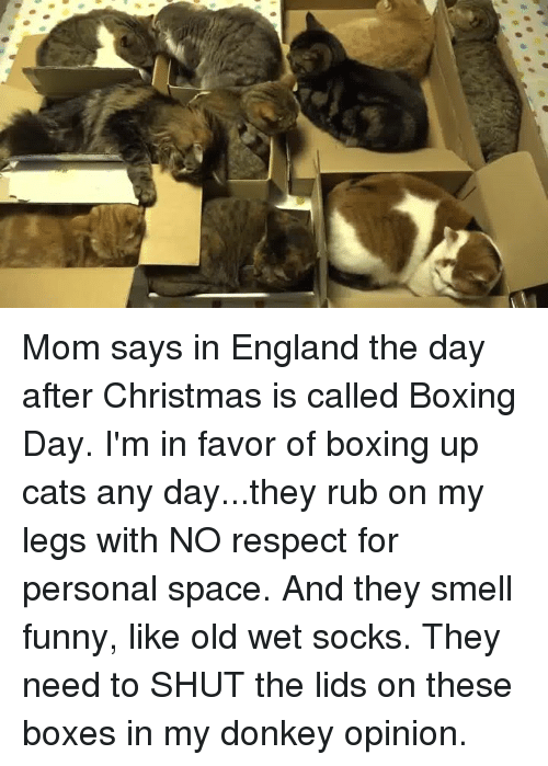 boxing donkey and england mom says in england the day after christmas is - What Is The Day After Christmas Called