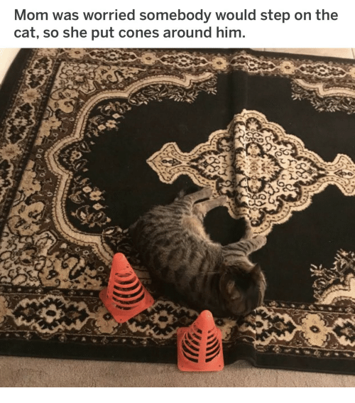 Mom, Cat, and Step: Mom was worried somebody would step on the  cat, so she put cones around him