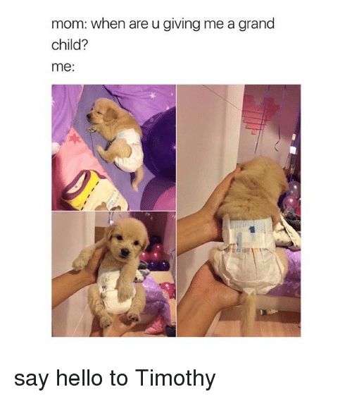 Hello, Girl Memes, and Grand: mom: when are u giving me a grand  child?  me: say hello to Timothy