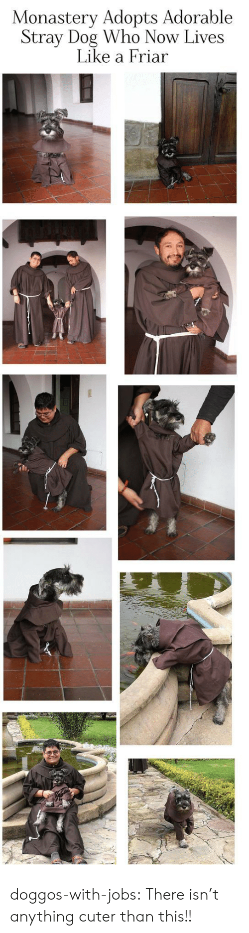 Tumblr, Blog, and Jobs: Monastery Adopts Adorable  Stray Dog Who Now Lives  Like a Friar doggos-with-jobs:  There isn't anything cuter than this!!