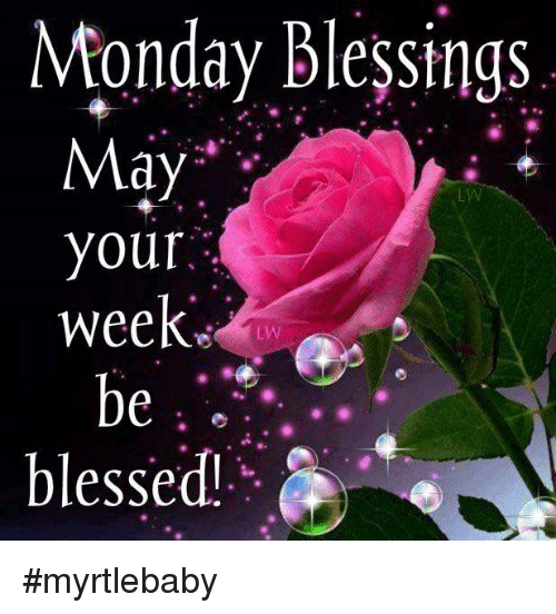 Blessed, Memes, and Mondays: Monday blessings May your weeks be blessed #myrtlebaby