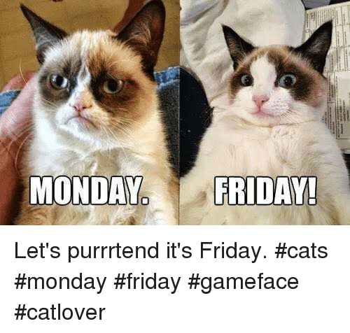 Friday, It's Friday, and Memes: MONDAY  FRIDAY! Let's purrrtend it's Friday. #cats #monday #friday #gameface #catlover