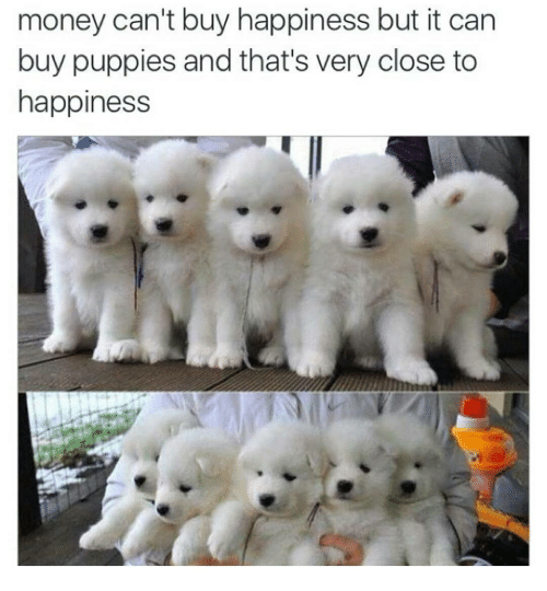 Money Cant Buy Happiness But It Can Buy Puppies And Thats Very