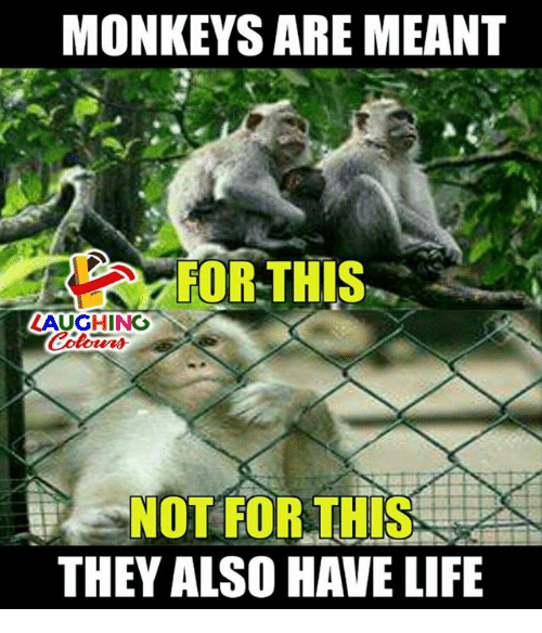 Life, Indianpeoplefacebook, and Monkeys: MONKEYS ARE MEANT  FOR THIS  LAUGHINO  NOT FOR THIS  THEY ALSO HAVE LIFE