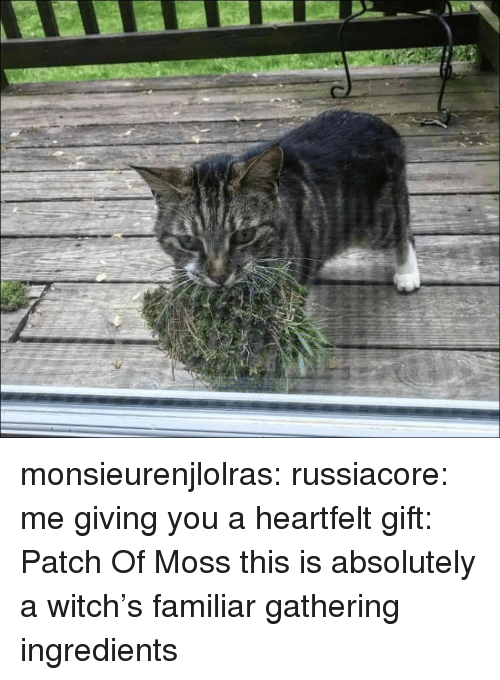 Tumblr, Blog, and Http: monsieurenjlolras:  russiacore: me giving you a heartfelt gift: Patch Of Moss  this is absolutely a witch's familiar gathering ingredients