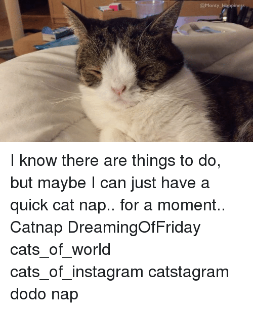 Cats, Instagram, and Memes: Monty Happiness I know there are things to do, but maybe I can just have a quick cat nap.. for a moment.. Catnap DreamingOfFriday cats_of_world cats_of_instagram catstagram dodo nap