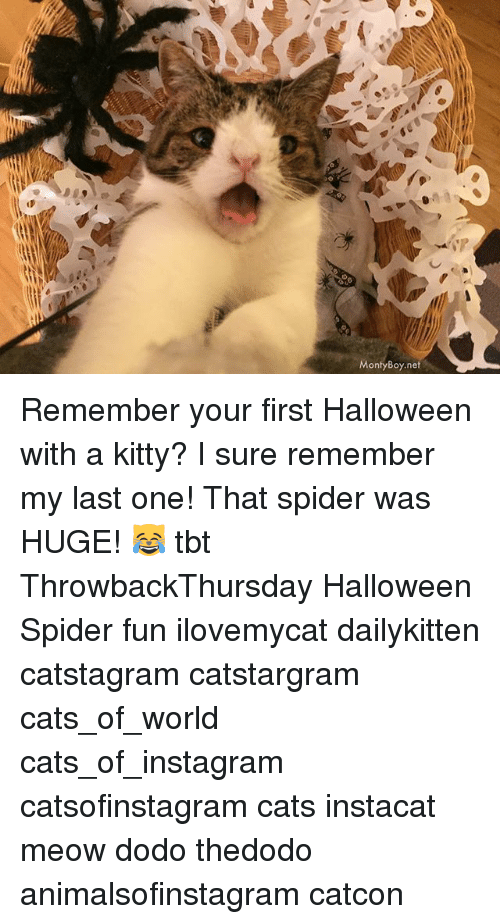 Cats, Halloween, and Instagram: MontyBoy.net Remember your first Halloween with a kitty? I sure remember my last one! That spider was HUGE! 😹 tbt ThrowbackThursday Halloween Spider fun ilovemycat dailykitten catstagram catstargram cats_of_world cats_of_instagram catsofinstagram cats instacat meow dodo thedodo animalsofinstagram catcon