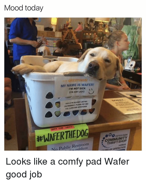 Funny, Thrift Shop, and Pad: Mood today  MY NAME IS WAFER!  I'M NOT SICK  (EM JUST LAZY》  rMA2TROLD BOYLAO MEX.  TM FRIENDLY, PLEASE PET ME  EPET  P.si LOVE EAR SCRATCMS  Not ease. tne  #WAFERTHEDOG--  600:STESPARK  COMMUNITY  No Public Restroom  THRIFT SHOP  ntiblicos  HORAS  SOF  TION Looks like a comfy pad Wafer good job