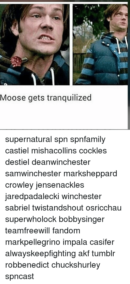 Moose Gets Tranquilized Supernatural Spn Spnfamily Castiel